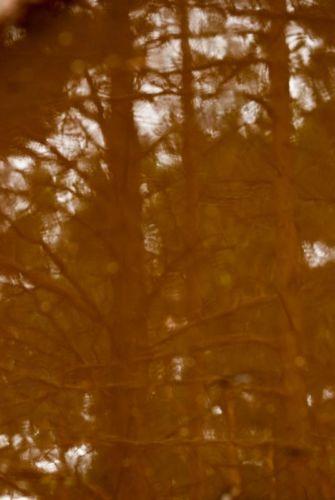 014zielonybursztyn-przyroda